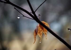 winter-rain-patty-kikos