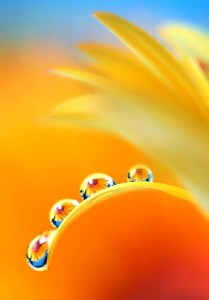 solar-plexus-chakra-patty-kikos-yoga-healing