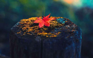 The Reluctant Fall into Autumn Equinox