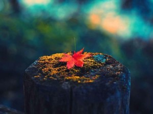 patty-kikos-autumn-equinox-chakra-balance