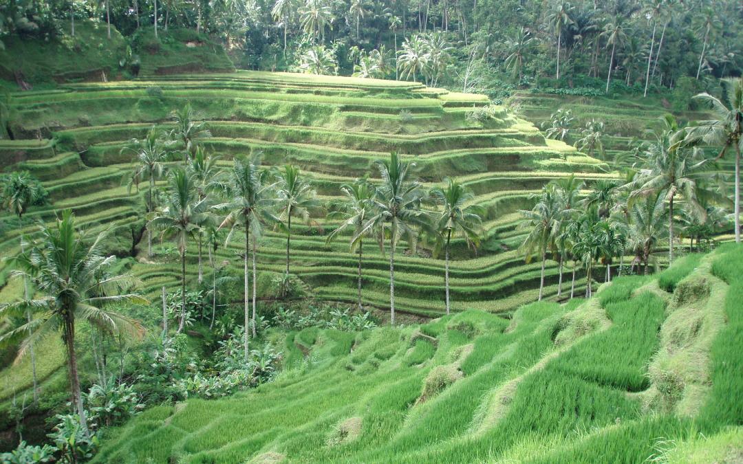 Bali, Blessings & Boundaries.
