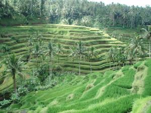 Bali - Blessings and Boundaries